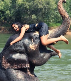 Playing-with-an-elephant_1