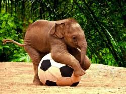 elephant-play