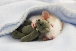 sleeping-hamster-teddy