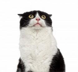 Mind Muggings Cat ~