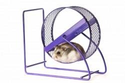 Hamster wheel ~~