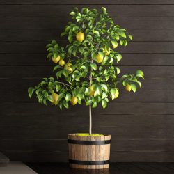 Lemon Trees Need More Than Likes 2